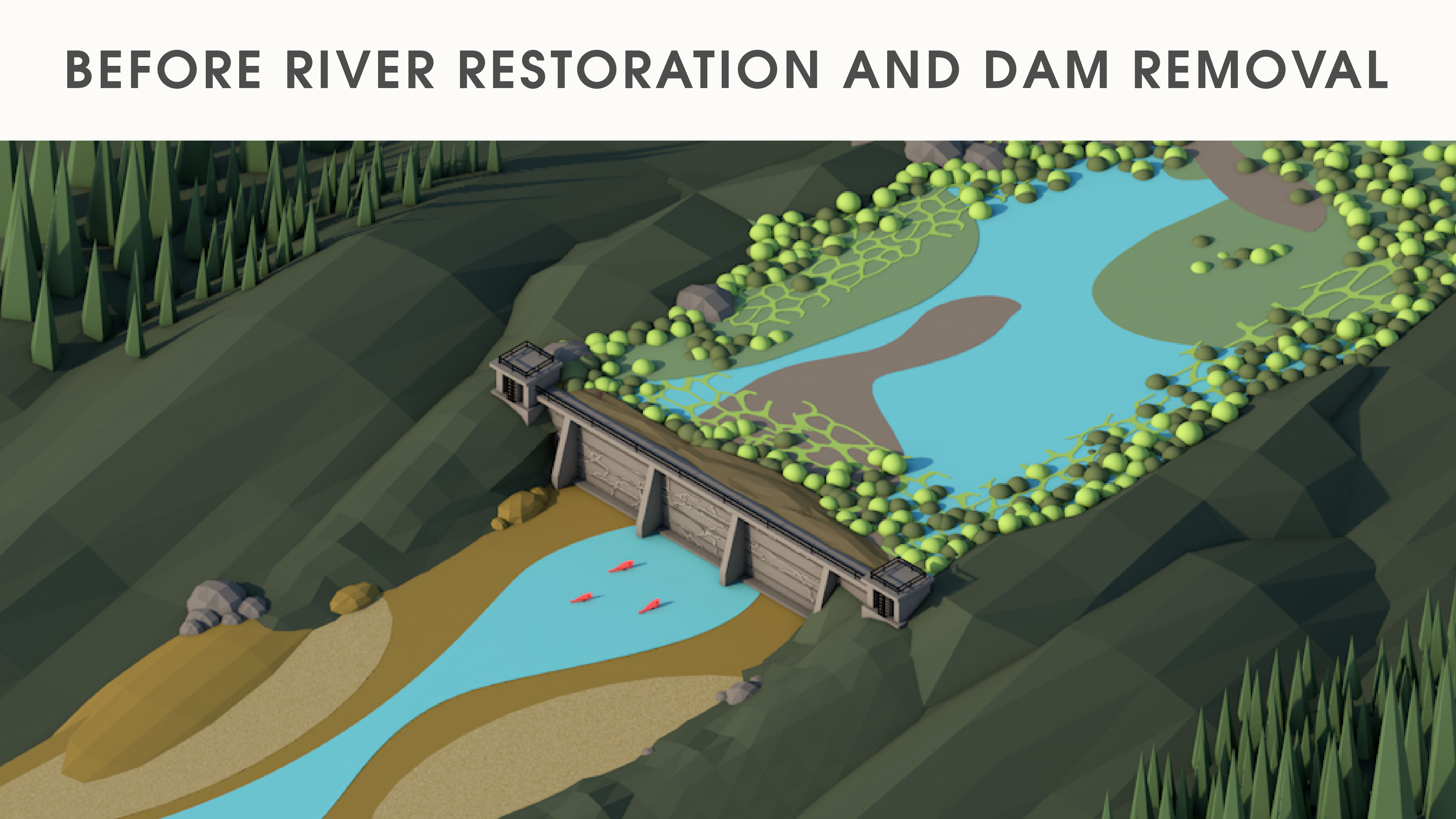 Before river restoration and dam removal graphic